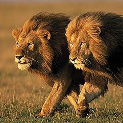 Lions trail  2016