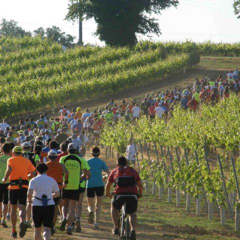 """La Mosnacotoise """"Trail du Vignoble Cognaçais"""""""