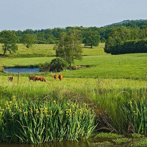 Trail du PNR Périgord-Limousin