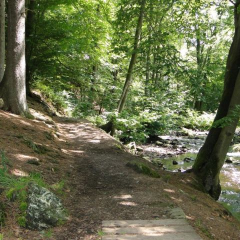 Trail de la Hoegne  2020