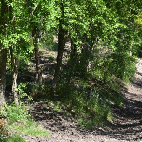 Trail de la Vallée de la Thyria  2015