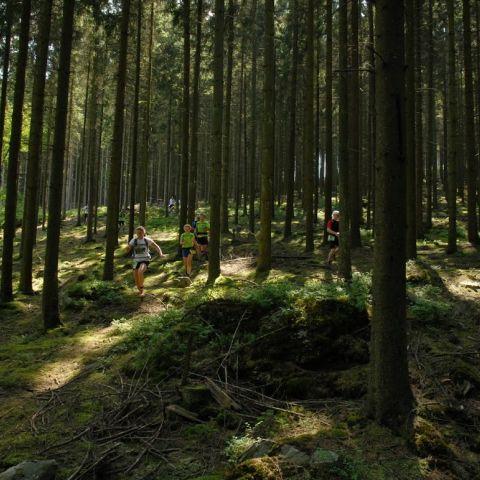 Trail des Croix  2017